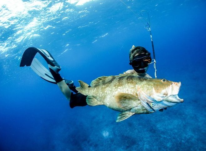 Spearfishing and fishing tour