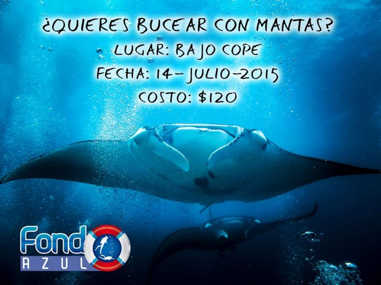 Dive with Manta Ray